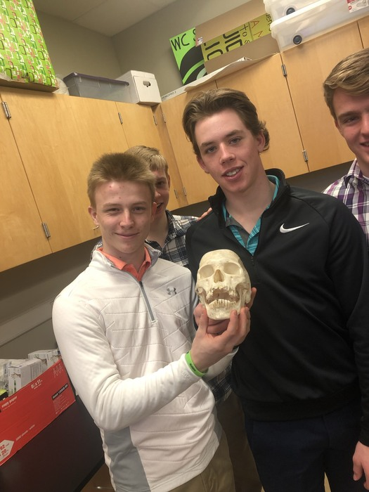 Yes, that is a real skull.